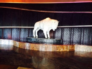 Buffalo in Casino